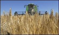 Wheat Harvest In Kansas Underway