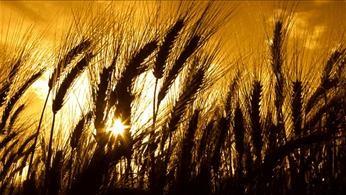 Wheat Plot Tour Coming to Seward County
