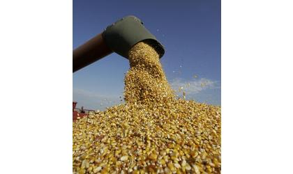 Corn Harvest Expected to be Down