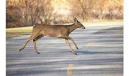 No Injuries Reported with 2 Deer/Vehicle Accidents