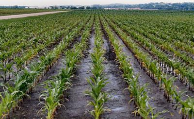 Field Work Stalled Due to Recent Rains