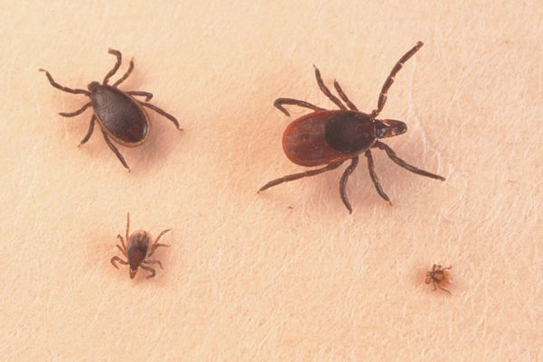 Tick-borne illness may be on the rise in Oklahoma