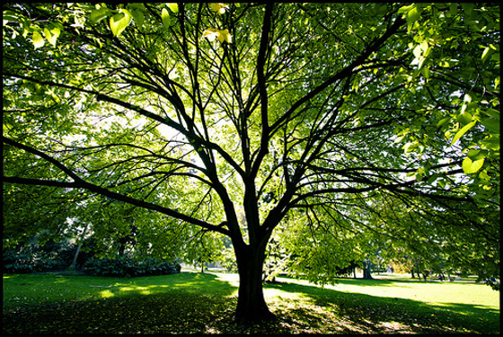 Tree Care Workshop to be Held November 4th in Liberal