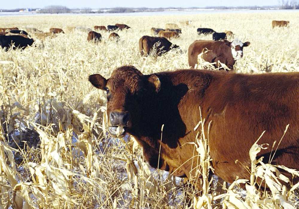 Beef and Forage Seminar Offered to Producers
